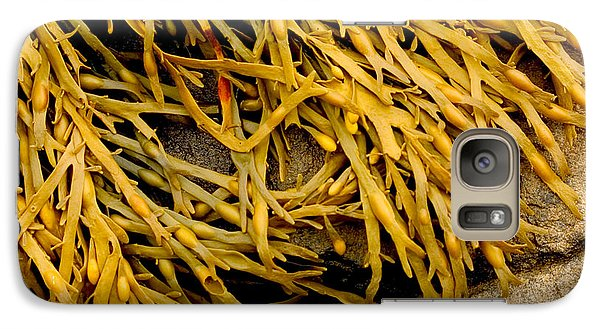Galaxy Case featuring the photograph Yellow Kelp by Brent L Ander