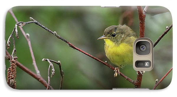 Warbler Galaxy S7 Case - Yellowthroated Warbler by Susan Capuano