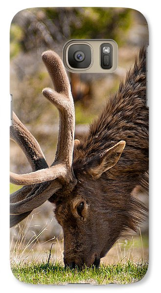 Galaxy Case featuring the photograph Young One by Colleen Coccia