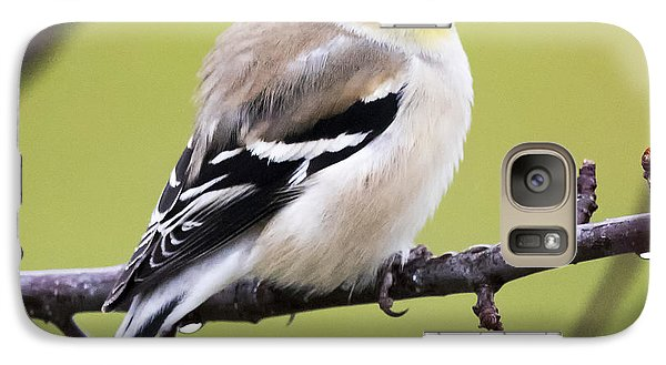 American Goldfinch Galaxy S7 Case by Ricky L Jones