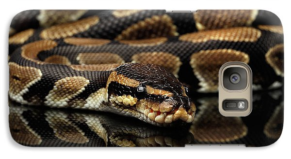 Ball Or Royal Python Snake On Isolated Black Background Galaxy S7 Case