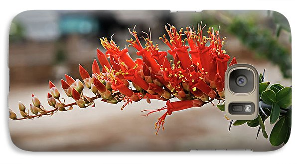 Galaxy Case featuring the photograph Beautiful Ocotillo by Robert Bales