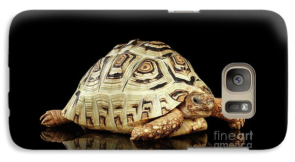 Closeup Leopard Tortoise Albino,stigmochelys Pardalis Turtle With White Shell On Isolated Black Back Galaxy S7 Case
