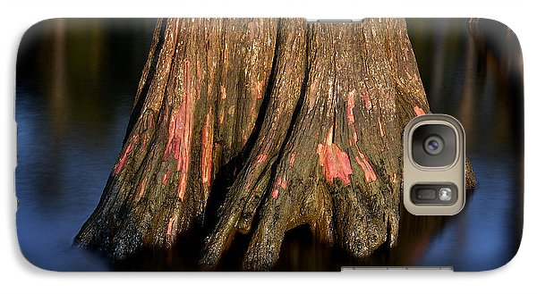 Galaxy Case featuring the photograph Cypress Tree by Evgeny Vasenev