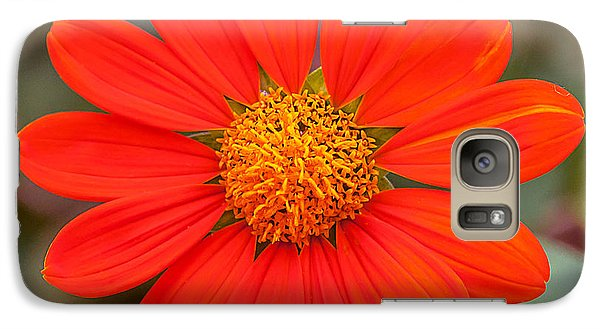 Galaxy Case featuring the photograph Fall Flower by Edward Peterson