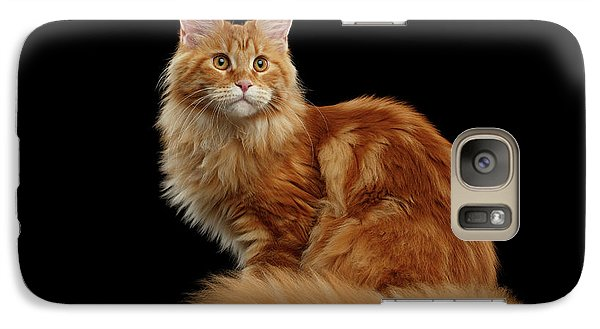 Cat Galaxy S7 Case - Ginger Maine Coon Cat Isolated On Black Background by Sergey Taran