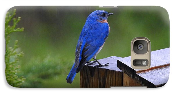 Galaxy Case featuring the photograph Male Bluebird  by Brenda Bostic