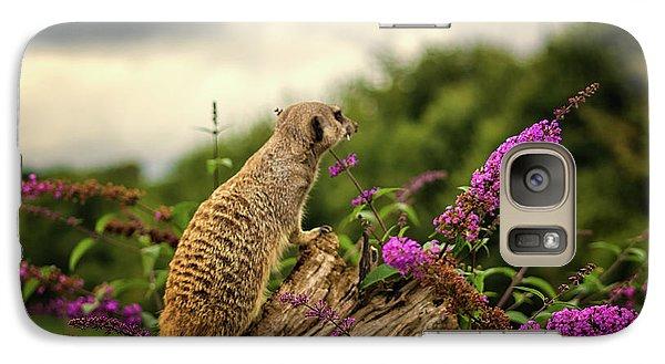 Meerkat Galaxy S7 Case - Meerkat Lookout by Martin Newman
