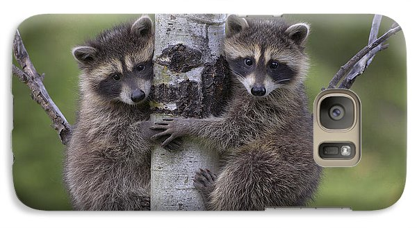 Raccoon Two Babies Climbing Tree North Galaxy S7 Case