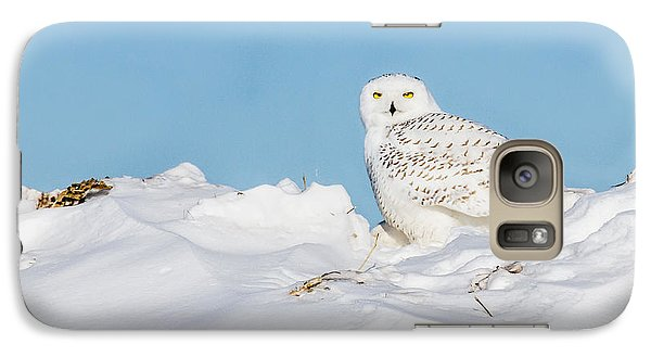 Galaxy Case featuring the photograph Snowy Owl by Dan Traun