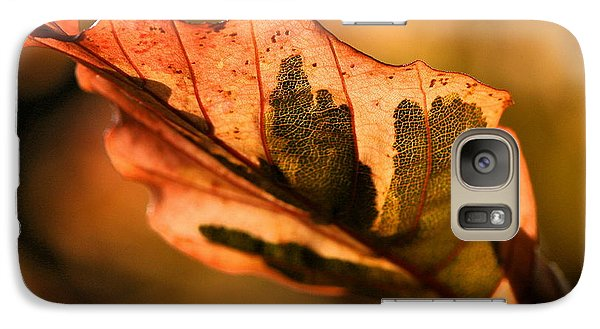 Galaxy Case featuring the photograph Tri-color Beech In Autumn by Angela Rath
