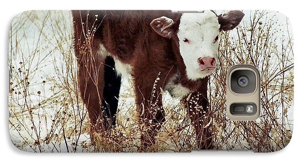 Galaxy Case featuring the photograph Winter Calf by Juls Adams