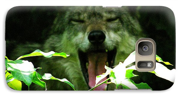 Galaxy Case featuring the photograph The Wild Wolve Group A by Debra     Vatalaro
