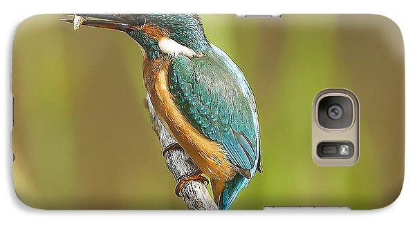 Kingfisher Galaxy S7 Case by Paul Neville