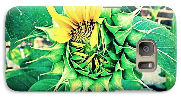 Galaxy Case featuring the photograph Peeping Sunflower by Angela Annas