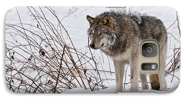 Galaxy Case featuring the photograph Timber Wolf In Winter by Michael Cummings