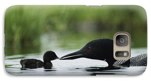 Loon Galaxy S7 Case - Loons by Michael S Quinton