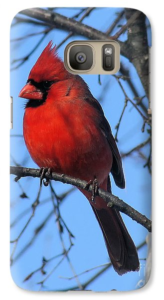 Northern Cardinal Galaxy S7 Case by Ricky L Jones