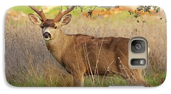 Galaxy Case featuring the photograph 8-point Black-tailed Deer Buck Broadside by Max Allen