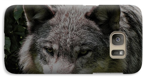 Galaxy Case featuring the photograph The Wild Wolve Group B by Debra     Vatalaro