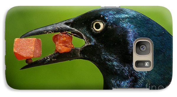 Galaxy Case featuring the photograph A Balanced Meal For A Grackle by Jim Moore