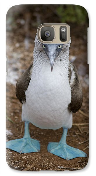A Blue Footed Booby Looks At The Camera Galaxy S7 Case
