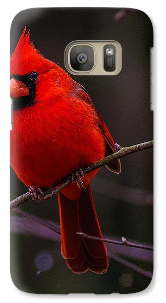 Galaxy Case featuring the photograph A Cardinal In January  by John Harding