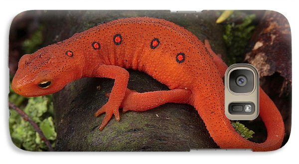 A Red Eft Crawls On The Forest Floor Galaxy S7 Case