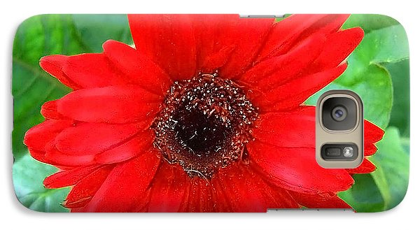 Galaxy Case featuring the photograph A True Red by Sandi OReilly