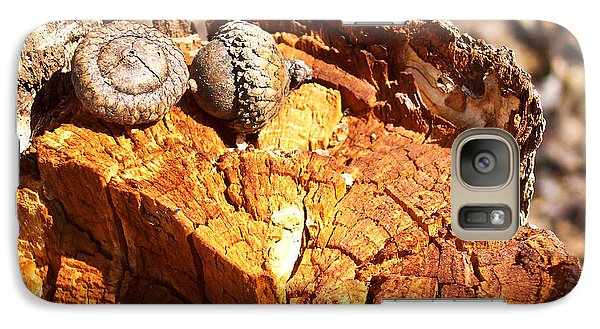 Galaxy Case featuring the photograph Acorns - The Cycle Of Life Continues  by Shawna Rowe