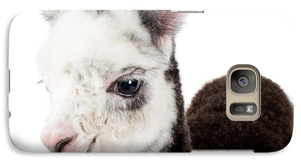 Adorable Baby Alpaca Cuteness Galaxy S7 Case by TC Morgan