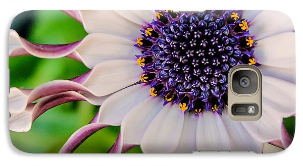 Galaxy Case featuring the photograph African Daisy by TK Goforth