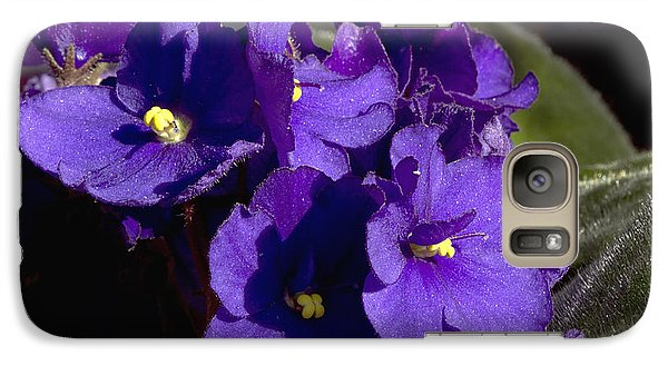 Galaxy Case featuring the photograph African Violets by Phyllis Denton