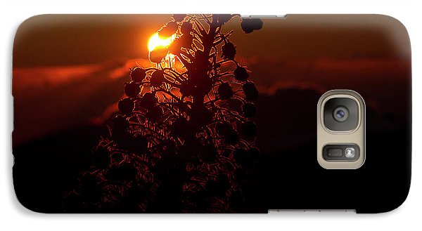 Galaxy Case featuring the photograph Ahinahina - Silversword - Argyroxiphium Sandwicense - Sunrise by Sharon Mau