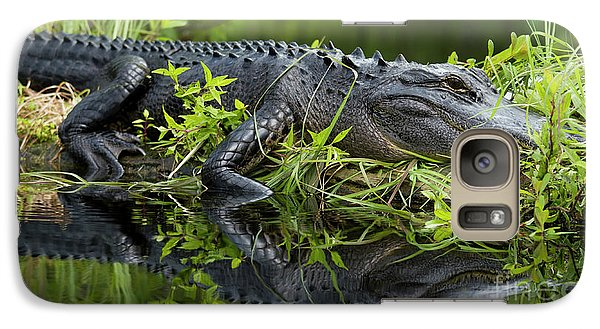 American Alligator In The Wild Galaxy S7 Case by Dustin K Ryan