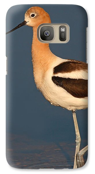 Galaxy Case featuring the photograph American Avocet Standing Tall by Max Allen