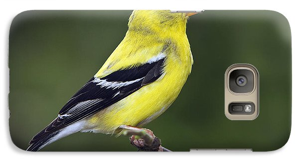 Galaxy Case featuring the photograph American Golden Finch by William Lee