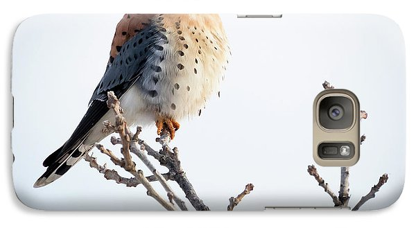 American Kestrel At Bender Galaxy S7 Case