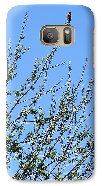 American Kestrel Atop Pecan Tree Galaxy S7 Case