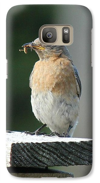 Galaxy Case featuring the photograph American Robin by Charles and Melisa Morrison