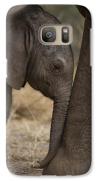 An Elephant Calf Finds Shelter Amid Galaxy S7 Case