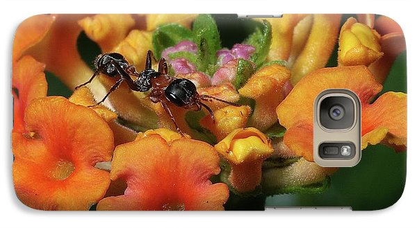 Galaxy Case featuring the photograph Ant On Plant  by Richard Rizzo