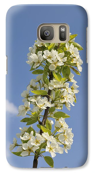 Apple Blossom In Spring Galaxy S7 Case by Matthias Hauser