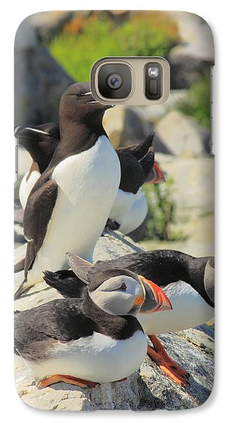 Atlantic Puffins And Razorbill Galaxy S7 Case by John Burk