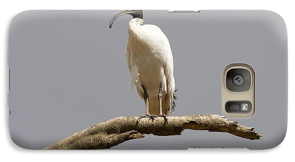 Ibis Galaxy S7 Case - Australian White Ibis Perched by Mike  Dawson