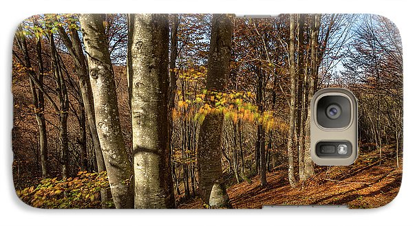 Galaxy Case featuring the photograph Autumn Afternoon In Forest by Davorin Mance