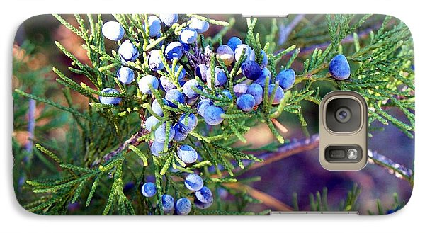 Galaxy Case featuring the photograph Autumn Berries by Betty Northcutt