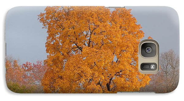 Galaxy Case featuring the photograph Autumn Tree by Donald C Morgan