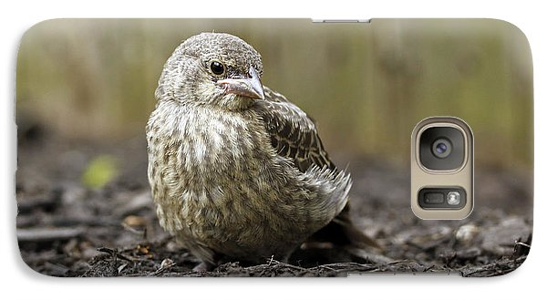 Galaxy Case featuring the photograph Baby Bird by Denise Pohl