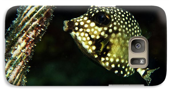 Galaxy Case featuring the photograph Baby Trunk Fish by Jean Noren